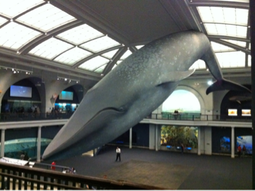 iphone/image-20111106235407.png